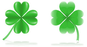 Lucky clover vector illustration Stock Images