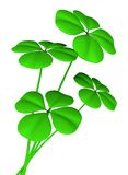 Lucky clovers Royalty Free Stock Photos