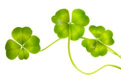 Lucky Clovers Pattern Stock Images