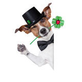 Lucky dog. Good luck chimney sweeper dog with hat and clover behind a blank banner Royalty Free Stock Image