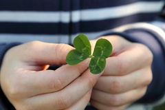 Lucky four leaf clover Stock Images