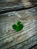 Lucky Four Leaf Clover. Four leaf clover on a rustic wood background royalty free stock photo
