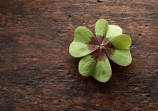 Lucky four leaf clover on textured rustic wood. Lucky fresh green four leaf clover on textured rustic wood with copy space symbolic of luck, love, faith and hope royalty free stock images