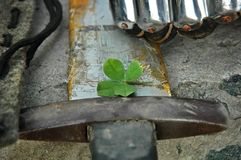 Lucky four-leaf clover on a training wooden sword stock image