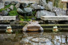 A Wish Frog royalty free stock images