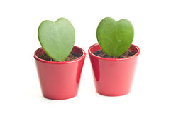 Lucky hearts Stock Photography