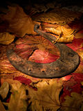 Lucky horse-shoe in the woods stock images