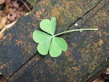Lucky Leaf Imagen de archivo