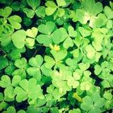 Lucky Leaf Lizenzfreie Stockbilder