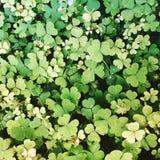 Lucky Leaf immagini stock libere da diritti