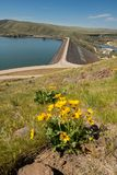 Lucky Peak Dam in Idaho with yellow arrowleaf balsamroot flowers royalty free stock photo