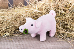 Lucky pig Royalty Free Stock Photography