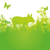 Lucky pig on the meadow. Lucky pig on the green meadow Royalty Free Stock Photography