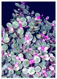Lucky Purple Succulent Plant - My Baby stock photo