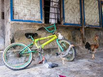 Free-Range Rooster and chickens sit on a bicycle in rural asia, Flores, Indonesia Royalty Free Stock Images