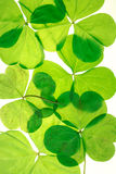 Lucky Shamrocks detailed pattern Stock Image
