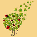 Lucky spring clover Stock Images