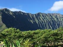 Lucky To vive em Havaí Foto de Stock