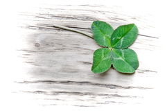 Lucky trefoil. Four leaf trefoil on wooden board, fading Stock Photo