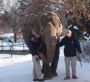 Lucy el elefante con los amaestradores fotos de archivo