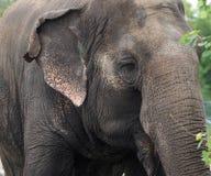 Lucy The Elephant imágenes de archivo libres de regalías
