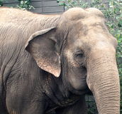 Lucy The Elephant lizenzfreies stockfoto