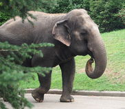 Lucy The Elephant imagens de stock royalty free