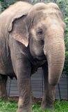 Lucy The Elephant foto de archivo