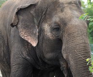 Lucy The Elephant Royalty Free Stock Images