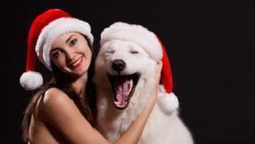 Luda 面对有狗的,黑背景,蓝眼睛圣诞节帽子! 免版税库存照片