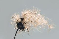 Ludd i solljuset Fotografering för Bildbyråer