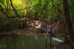 Luddig skog, skog i en röra, vattennedgång och ljus i forst royaltyfri bild