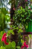 Luddig växt Arkivbild