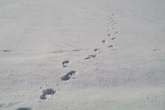 Ludzcy odciski stopy w śnieżnym rozciąganiu w odległość Obrazy Royalty Free