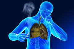 Ludzcy organy Obrazy Royalty Free