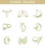 Ludzcy organy, wektorowa ilustracja Zdjęcia Royalty Free