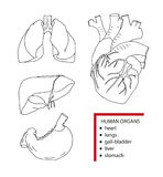 Ludzcy organy, wektorowa ilustracja ilustracji