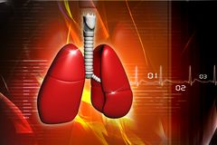 ludzcy płuca Zdjęcia Royalty Free