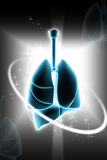Ludzcy płuca Obrazy Royalty Free