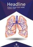 Ludzcy płuca z dychawką, oskrzele, oskrzela, łódeczka, w niski poli- Obraz Stock
