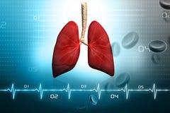 ludzcy płuca Fotografia Royalty Free