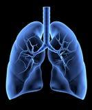 Ludzcy płuca Obraz Royalty Free