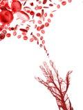 Ludzcy ręk komórek krwi naczynia Obraz Stock