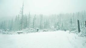 Ludzie chodzą łamanymi drzewami po ciężkiej burzy w zima lesie Fotografia Royalty Free