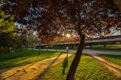Ludzie chodzą na ciepłym wiosna wieczór podczas zmierzchu w Turia parku valencia fotografia stock