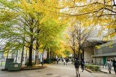 Ludzie chodzą w ginkgo parku w jesieni brać w Tokio Japonia Fotografia Royalty Free