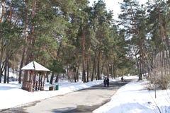 Ludzie chodzą w wiosna parku blisko Kijów drogi leśną zimy Obraz Royalty Free