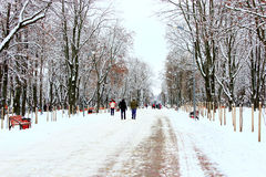 Ludzie chodzą w zima parku z wiele dużymi drzewami i ścieżką Fotografia Stock