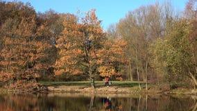 Ludzie chodzą z psem w jesień parku przy słonecznym dniem wzdłuż jeziora zdjęcie wideo