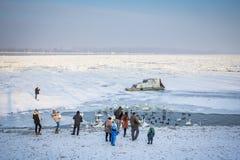 Ludzie chodzi na zamarzniętym Danube w Belgrade, Serbia, w Stycznia 2017 opłacie zimna pogoda nad Bałkany wyjątkowo Obraz Royalty Free